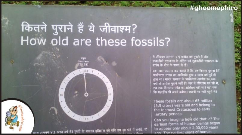 ghughua-fossil-park