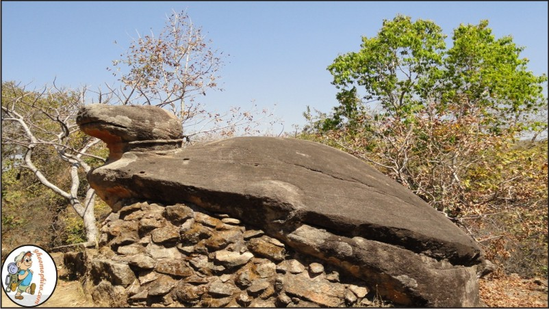 Bandhavgarh_tortoise